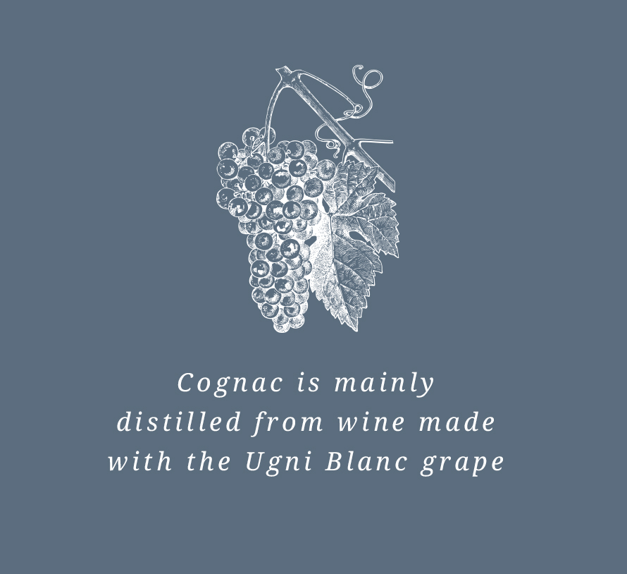 Cognac is mainly distilled from wine made with the Ugni Blanc grape